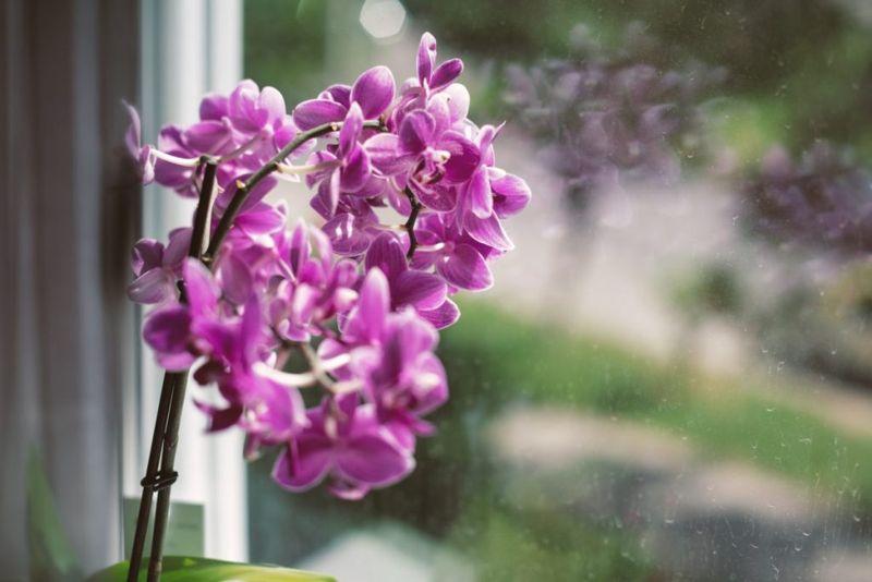 pruning stem moth orchid