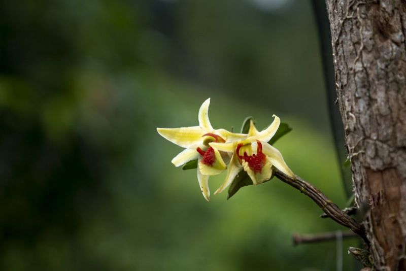 orchid grow natural trees