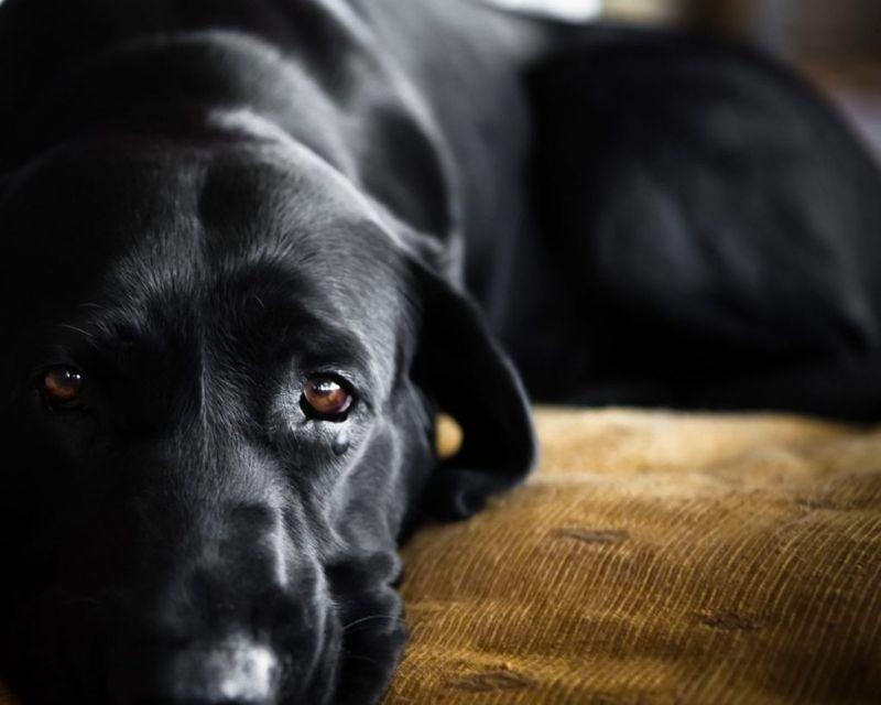 dog alone discomfort