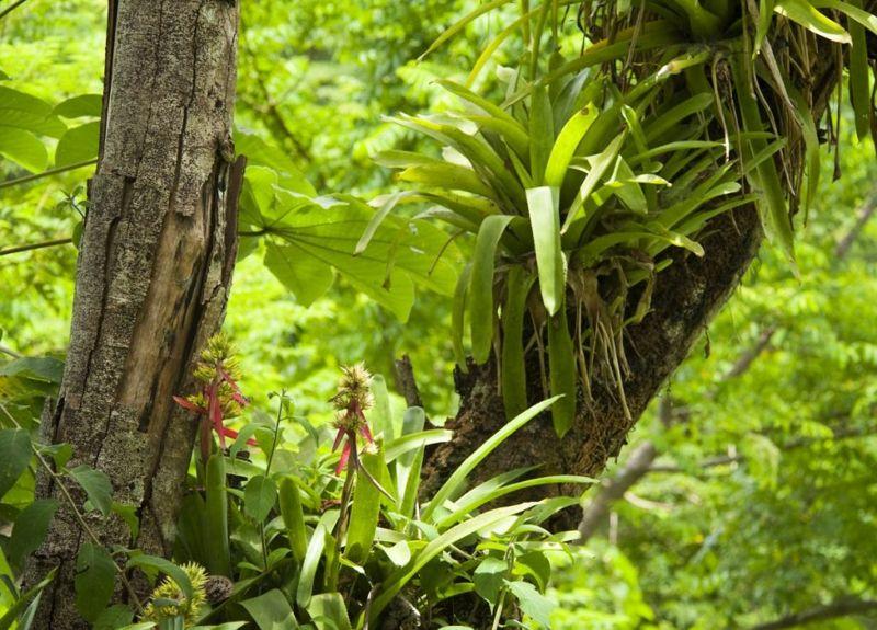 Saxicolous terrestrial epiphytic
