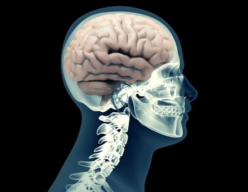 pre-frontal-cortex basal-ganglia