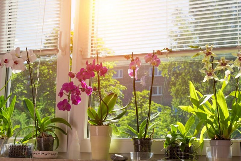 windowsill orchid natural sunlight