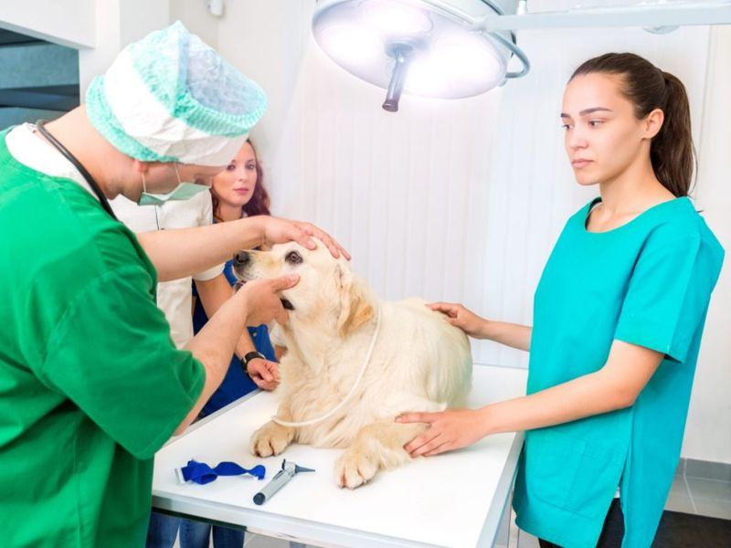 treatment, hospitalized, advanced, fluid, antibiotics