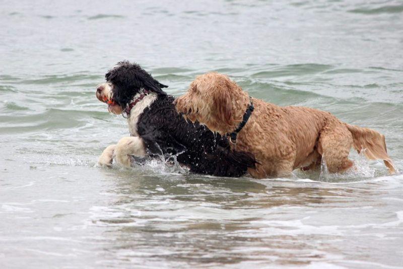 Porites Swimming Playing