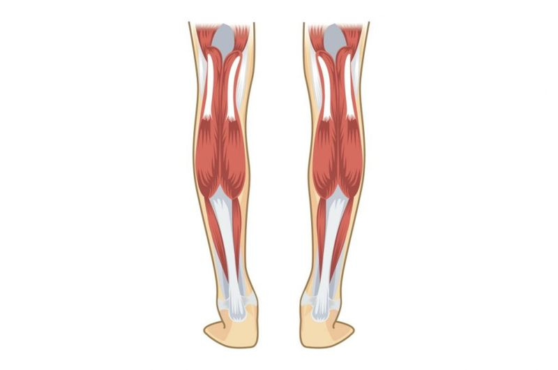 achilles calf muscles