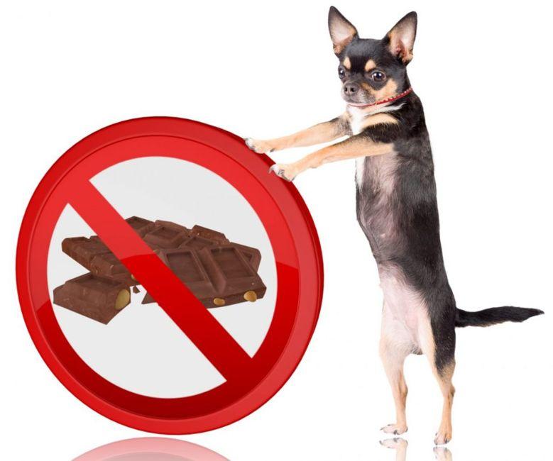 toxic chocolate pet