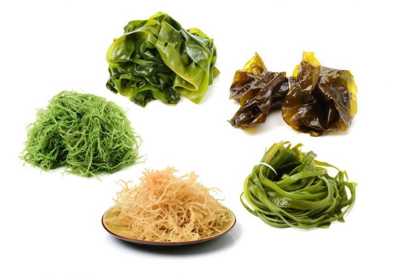 sea plant varieties