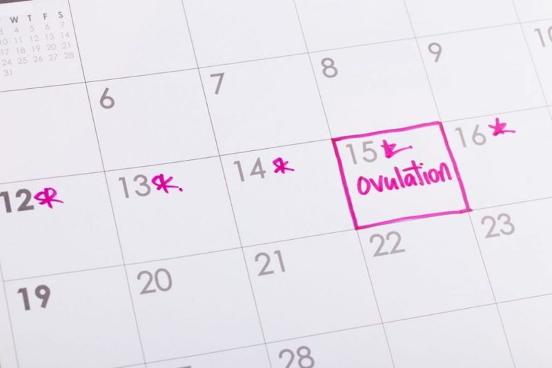 tracking ovulation cycle