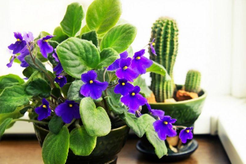 houseplants foliage healthy
