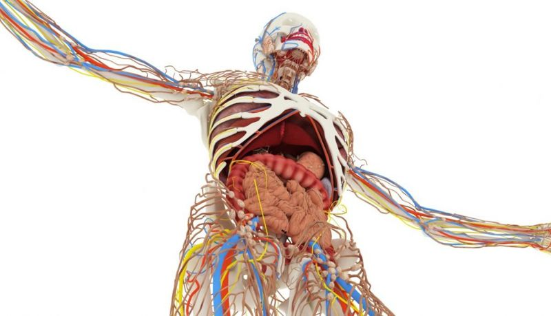 nerve bone muscle ligament vulnerable