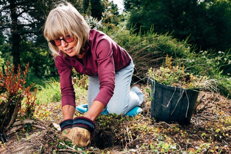 soil, planting, mulch