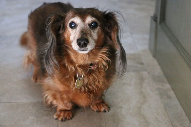 Elderly Dog