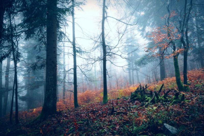 Dark scary foggy autumn season wood landscape