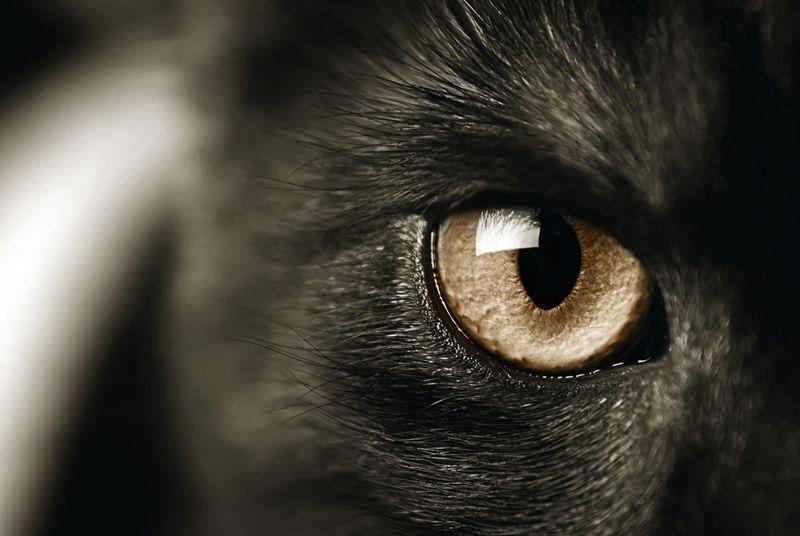 closeup of a cat's eye, toned sepia