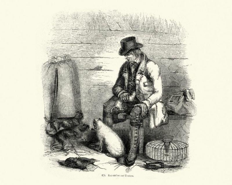 Rat Terrier in Victorian Times