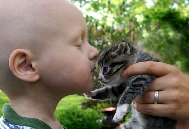 cancer child kitten