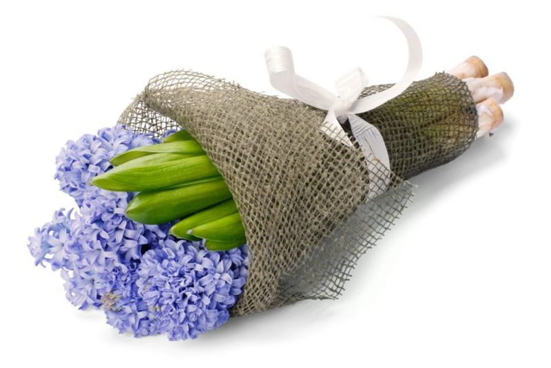 Blue Hyacinth Symbol of Love