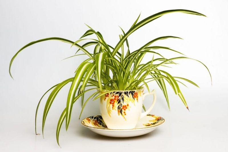 alternative plant names