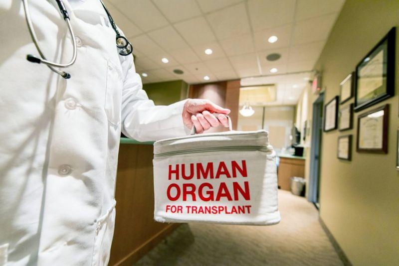 organ transplant donor recipient