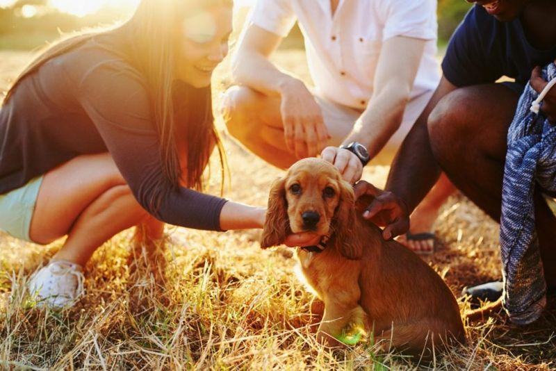 teens petting dog