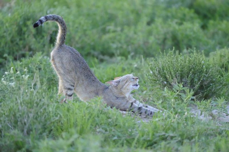 vulnerable status endangered habitat