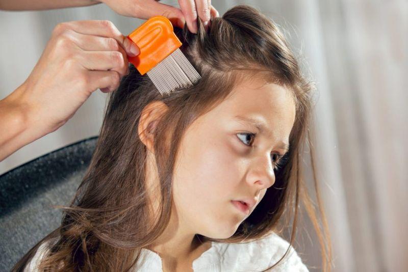 ylang ylang kill head lice