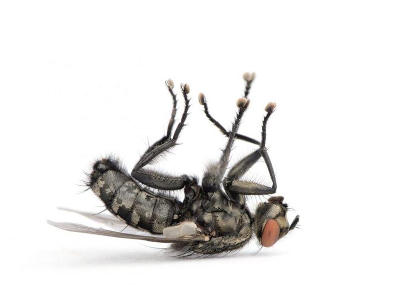 ylang ylang insect repellant