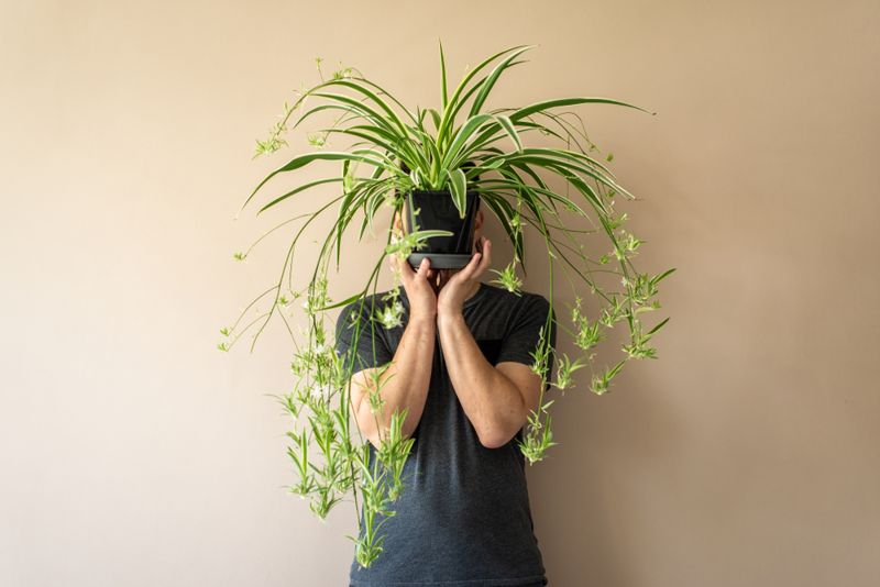 Man standing in front of a brown (beige) wall, holding a spider plant in front of his face