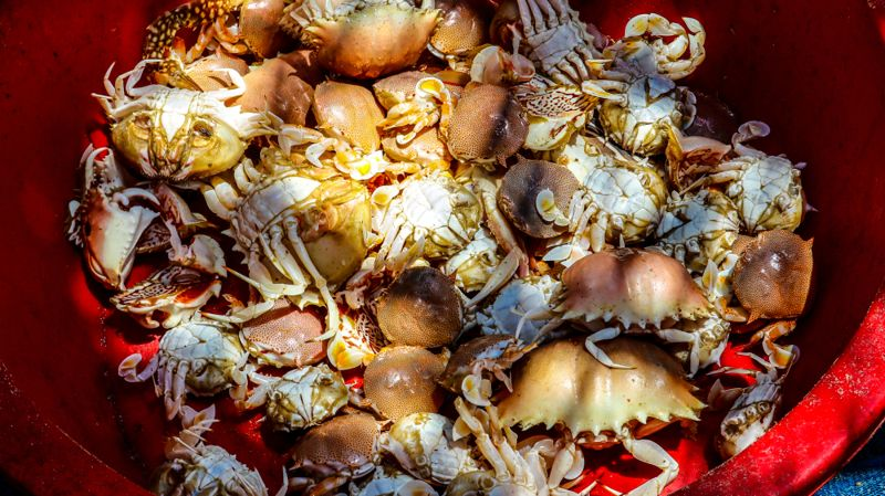A type of sea crab that fishermen can catch
