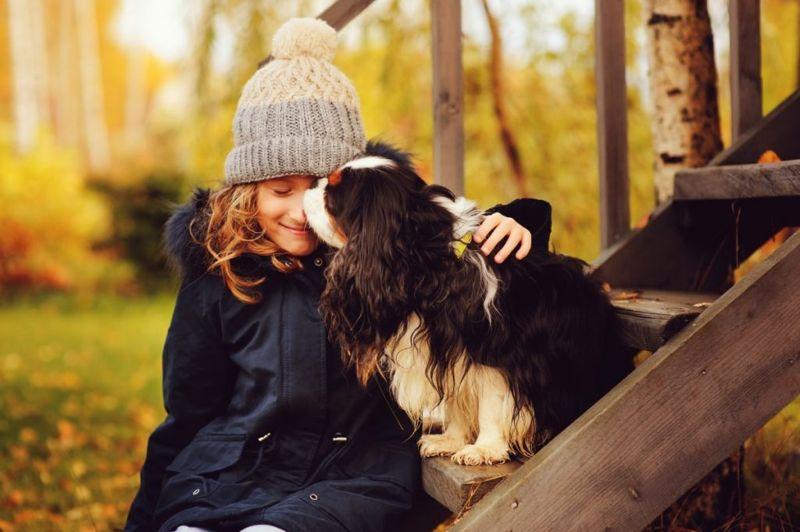kind charles spaniel children pets