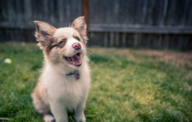 trendy purebred puppies
