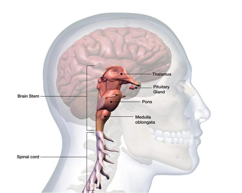 pituitary hemorrhage glands