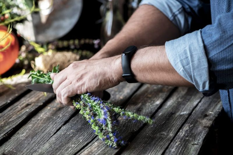 growing your own hyssop