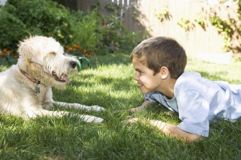 wheaten terriers and children