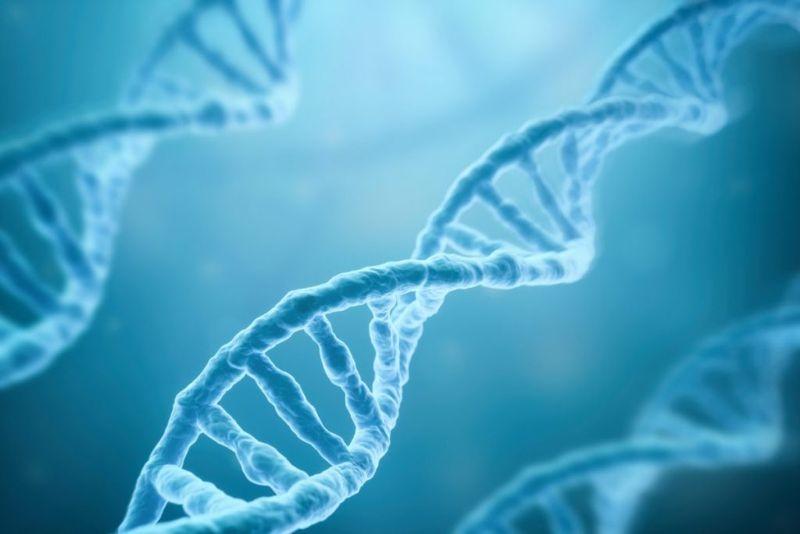 gene type IV collagen mutation