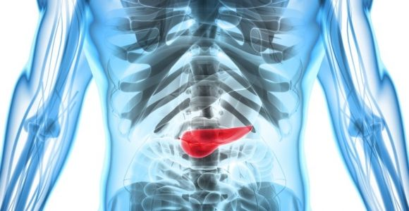 Functions of the Pancreas