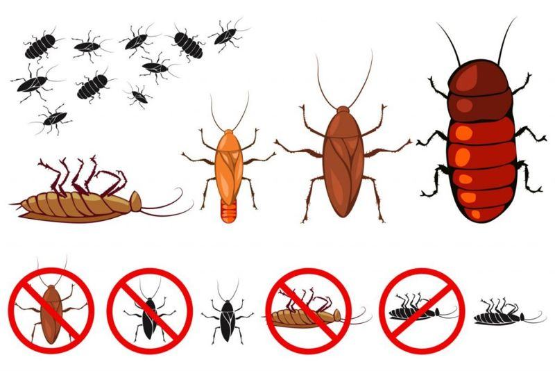 bugs pests