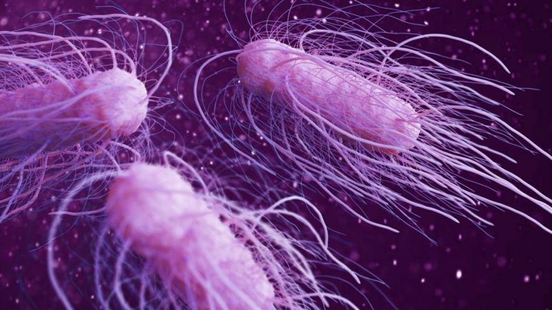 food bacteria salmonella