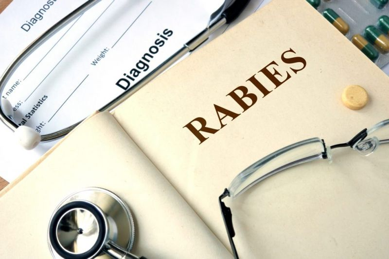 Rabies Virus Transmission