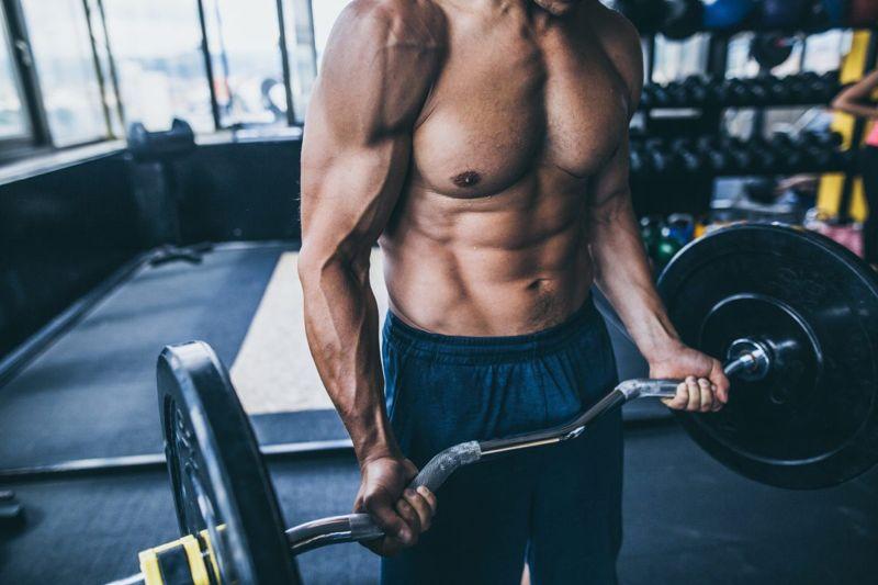biceps brachii forearm