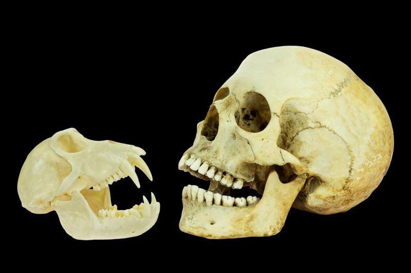 DNA testing ancestry