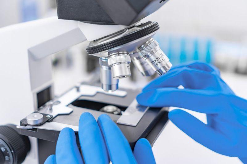 Examining skin biopsy slide