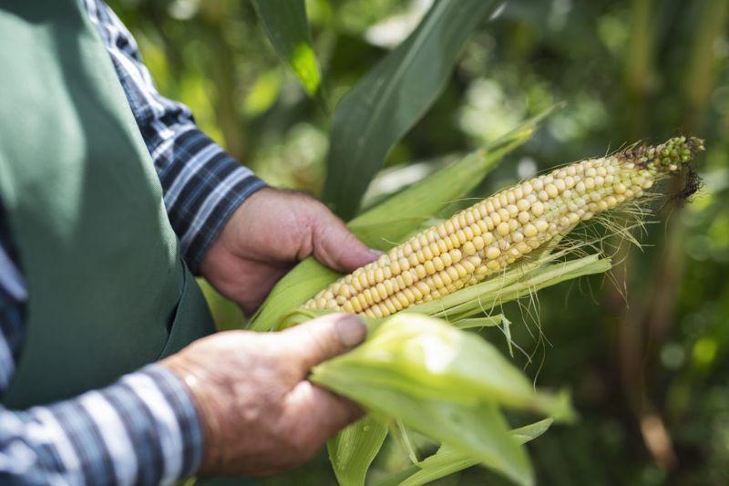 corn products dextrose