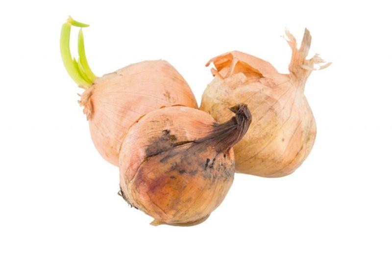 black mold onion