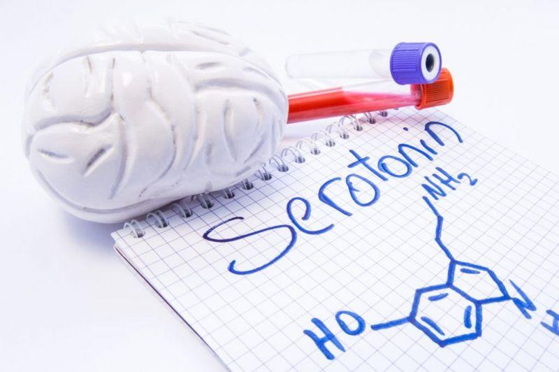 visualization of serotonin and model brain