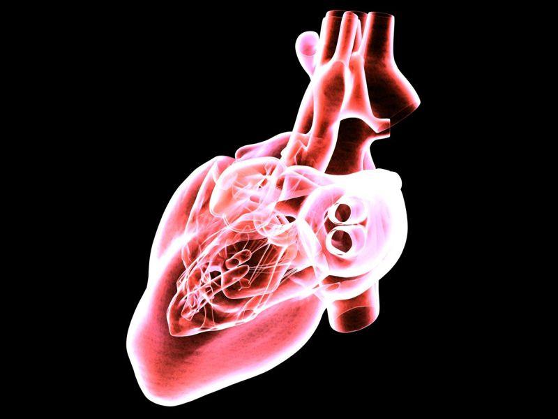 The Heart is a Vital Organ
