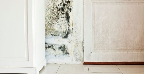 What is Black Mold?