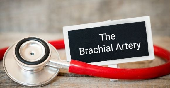 What is the Brachial Artery?