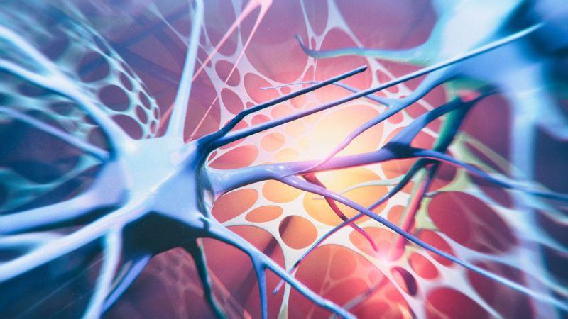 functional neuroplasticity adaptation