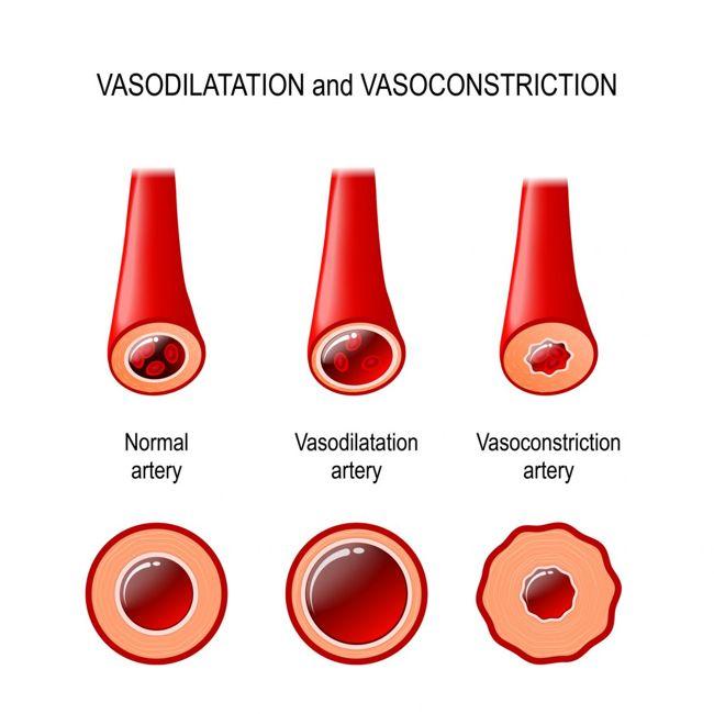 Diagram of a blood vessel